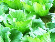 投资都市菜园大概要多少钱?前期费用多少