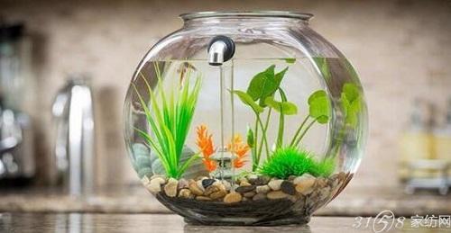 更加轻松的鱼缸——自动换水鱼缸