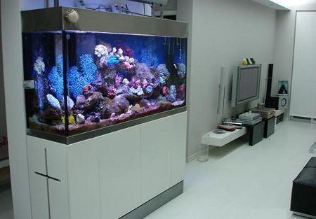 风水 > 客厅鱼缸摆放风水注意事项   因此,鱼缸的高度,建议沙发位置