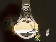 光色彩灯饰永利娱乐www402代理的流程是什么?