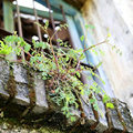 家里阳台养什么植物旺财旺宅?