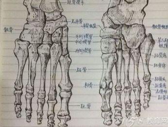 很多看过高阳这份手绘骨骼图的网友都认为,高阳之前肯定学习过绘画