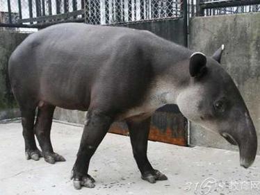 这种长相怪异的动物生活在巴西