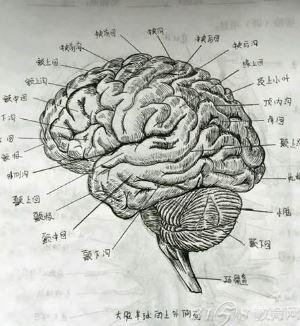 医学女生手绘解剖图堪比印刷