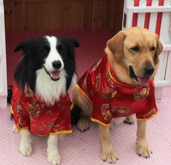"""神犬小七,加菲猫阿旺等""""萌宠"""""""