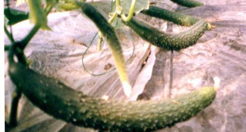 农村种植有机蔬菜前景大不大?