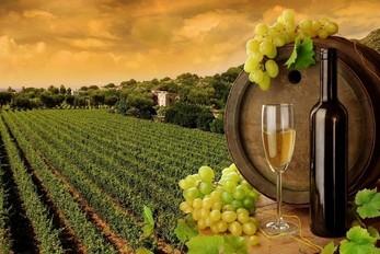 做宁夏贺兰山进口红酒代理商需要哪些条件