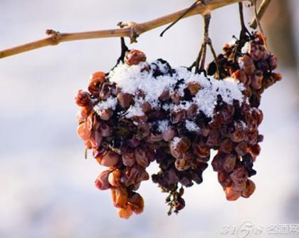 甜葡萄酒怎么酿造?甜葡萄酒酿造方法