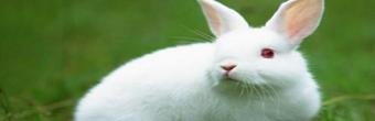 80后女大学生创业养兔