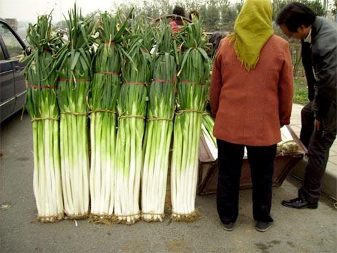 章丘大葱 山东最有特色的蔬菜图片
