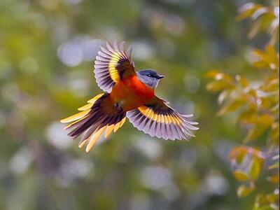 首届中国天津滨海国际观鸟文化节