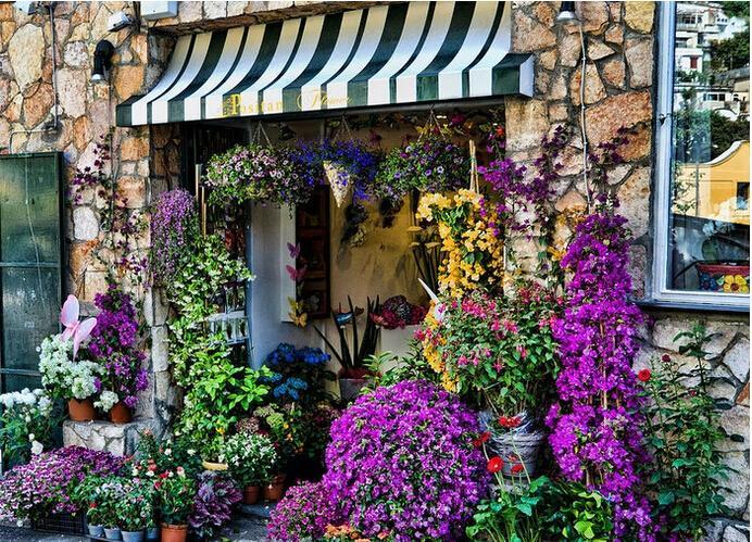 (各种花的养护)找店面的方法.答:开家花店--花店地址必备条件1.图片