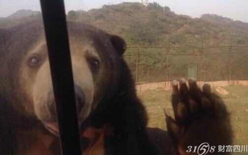 野生动物园惊险游-3158四川分站