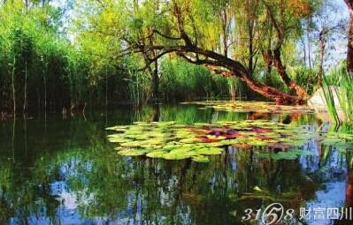 四季花海位于四川西昌邛海湿地东北岸,西起小渔村与湿地保护区烟雨鹭