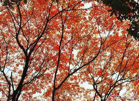 单线式简笔画树叶