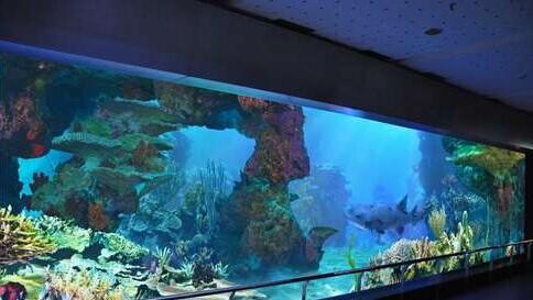 青岛海底世界推2014暑期主题活动 三大表演齐上阵