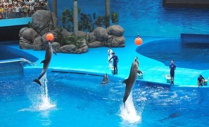潜入水下体验与海豚共舞 鲸豚表演场——大型极地动物室内表演场