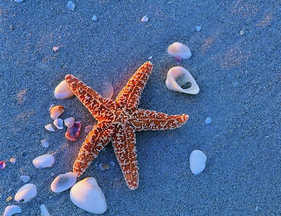 超轻彩泥海星制作步骤