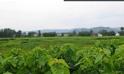 桑蚕养殖厂房设计图片