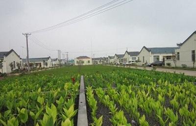 湖北景點江夏區自然地理狀況