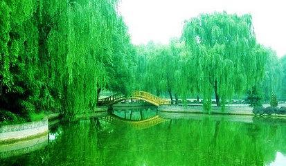 中原绿色庄园与美国迪斯尼公园合作的杂技艺术馆,拥有中国最大的杂技