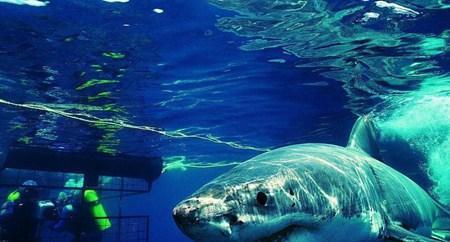 领略海洋奥秘:富国海底世界