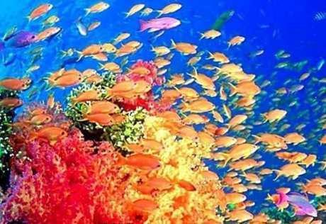 馆内总观秦皇岛新澳海底世界总建筑面积约2万平方