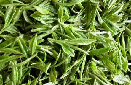 湖南特产八面山玲珑茶