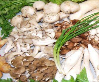 种植食用菌一亩地一年能赚多少