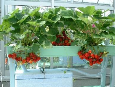 爱家者私家生态菜园加盟费是多少?