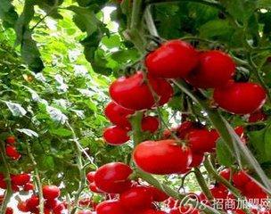 怎么联系加盟中农共信有机瓜菜工厂?需要多少资金