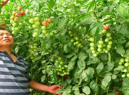加盟中农共信有机瓜菜哪里可以培训?费用多少