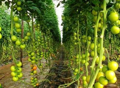 中农共信有机瓜菜工厂投资要多少钱?
