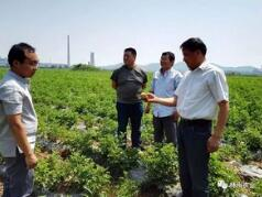 """""""三夏来临""""山西下大力气确保农资市场供应充足"""