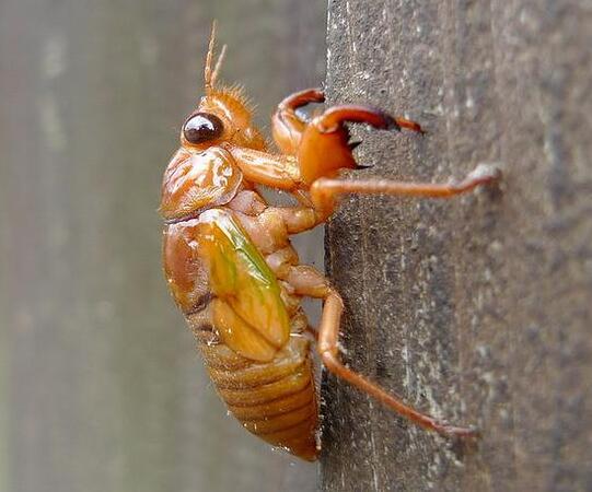 中国人最喜欢的昆虫美食,快被吃绝了