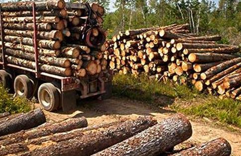 缅甸木材业