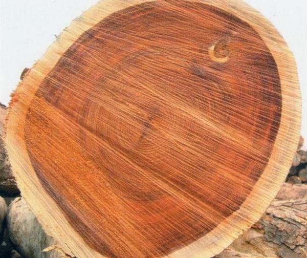 宁波口岸进口原木实现爆发性增长 非洲名贵原木