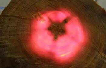 血龙木鉴别方法讲解,血龙木手串怎么盘