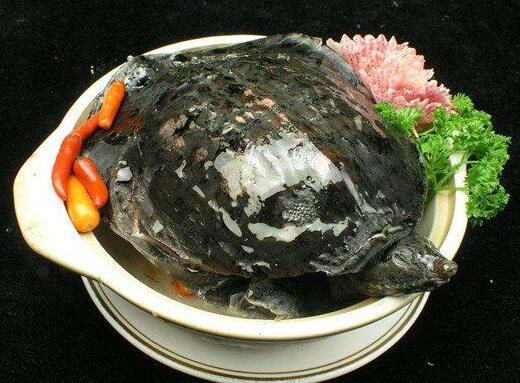 滋阴补肾的上佳宴席食材——甲鱼