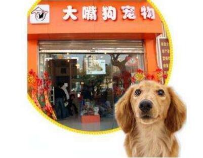 大嘴狗宠物店经营范围有哪些