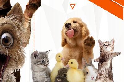 2018开一家爱尚宠宠物店要多少钱 开店有什么要求