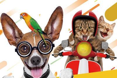 爱尚宠宠物店的加盟费高不高 需要多少钱