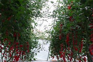 农村建什么厂** 有机瓜菜工厂好不好做