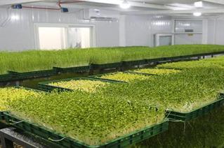 在农村开一个蔬菜工厂**吗 利润是多少