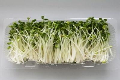 菜立方芽苗菜现在的加盟费及总费用分别大概要多少