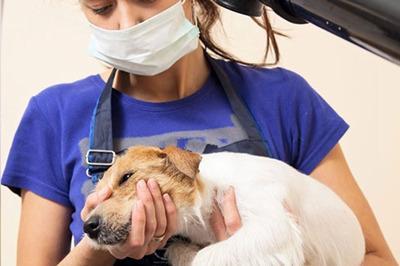 大嘴狗寵物培訓學校有哪些加盟條件 開店總投資大嗎