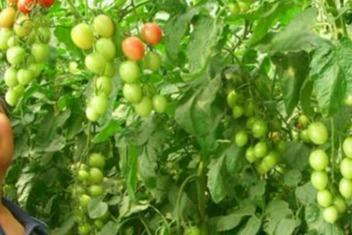 中農共信有機瓜菜工廠