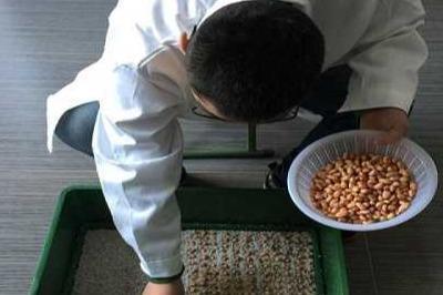 中国芽苗菜智能化生产技术哪里学