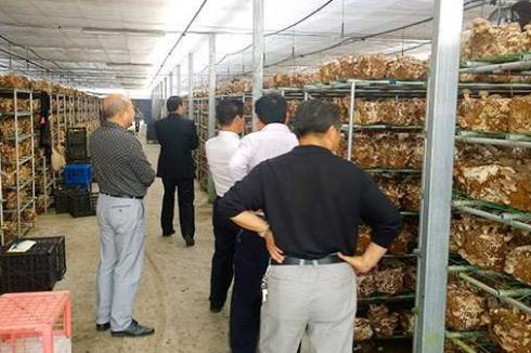 上海哪里可以学种植食用菌
