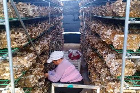 现在种植食用菌能有市场吗